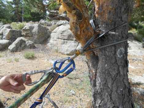 Anclaje en un buen árbol-Montañero Cima